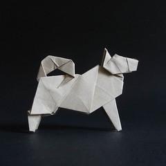 Dog, designed by  Hideo Komatsu   [Hideo Komatsu challenge 30/50] (Orizuka) Tags: origami dog hideokomatsu hkchallenge