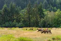 Matriarch (Aaron Fredericy) Tags: redwoodsnationalpark redwoods redwood redwoodnationalforest california hiking green summer forestfire smoke pacificnorthwest pnw camping explore
