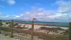 Hey gulls (rjmiller1807) Tags: gulls seagulls hartlaubsgulls tablemountain fence beach sea clouds blouberg blaauwberg bloubergstrand capetown southafrica views birds 2017 january jogging running boat ship atlantic