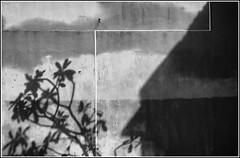 (meezoid) Tags: cool7 abstract blacknwhite blackandwhite bw shadow lines shapes frame blocks neopolitan strips tree flecks texture canvas wall cool2 cool3 uncool cool4 uncool2 uncool3 uncool4 cool5 cool6 uncool6 iceboxcool