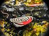 Diaethria Neglecta (Naturescrack) Tags: antioquia colombia bug butterfly worm gusano mariposa macro macrophotography macrofotografía nikkor nikon raynox nature naturaleza wildlife insect insecto