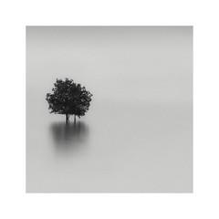 untitled (^soulfly) Tags: longexposure classic tree 10yearsold canon40d hoyafilter ndx400 simplicity minimalistic minimal monochrome homage lonetree haiku