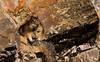 Chipmunk @ Cameron Falls (DCZwick) Tags: chipmunk animal rocks watertonnationalpark watertonglacierinternationalpeacepark waterton alberta canada pentaxk3 da60250x14 groundsquirrel goldenmantledgroundsquirrel