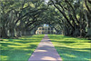 vanishing point – outdoor (Bernergieu) Tags: usa louisiana plantation green trees alley vanishingpoint fluchtpunkt zentralperspektive oakalley