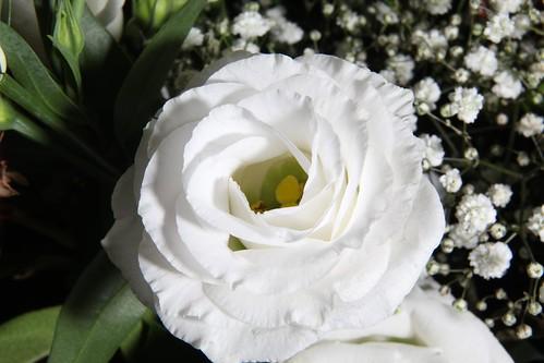 20170919 009 Baarlo Macro bloem