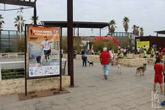 "Actividades de la 5ª Can-rrera Popular de Valencia 2017 • <a style=""font-size:0.8em;"" href=""http://www.flickr.com/photos/145784091@N07/37428001731/"" target=""_blank"">View on Flickr</a>"