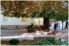 Autumn of the veteran. (Ігор Кириловський) Tags: autumn veteran c41 holovnastr chernivtsi ukraine slr nikonf5 nikkor 50mmf18afd film kodak colorplus200 bw uvhaze mrcnano xspro digital