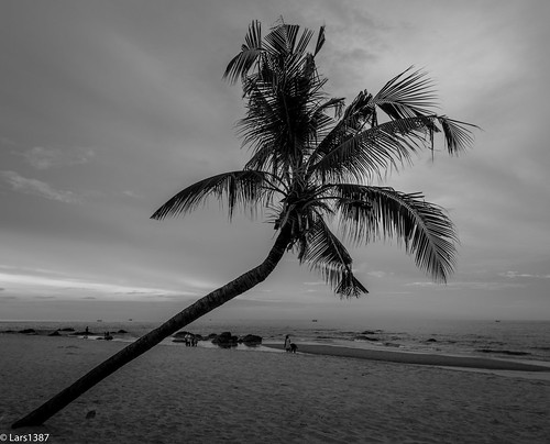 Palm from the left