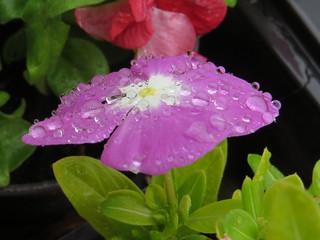 The rainfancied . . Esőcseppek.
