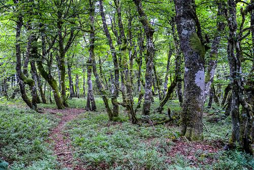 Vogesen Vosges 170723 1084.jpg