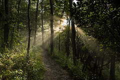 Dance In The Forest (riqwammy) Tags: nature natural sunshine rays path hike trail hiking forest woods trees green summer light recreation outside outdoors nikon d750 mountains virginia southwestvirginia floyd buffalomountain