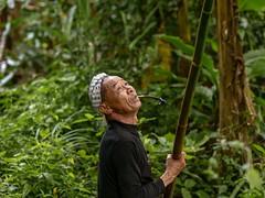 Basha - Homme enlevant des mauvaises herbes dans un arbre. (Gilles Daligand) Tags: chine china guangxi basha village miao homme panasonic gx7