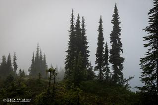 _BW77930-AlpineBalsam