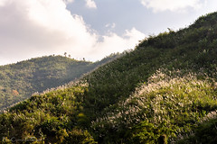 Light on the Hills (Billy Clapham) Tags: laos mekongriver slowboat travel backpacking jungle forest hills mountains river boat nikond7100 light