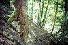 """Found an """"Ent"""" in my wood (TSET0147) Tags: canon canon35l14 canon7d canonef35mmf14lusm 35l festbrennweite prime primelens wald wood tree baum ent herrderringe lordoftherings tset0147 tset niederösterreich wurzel roots"""