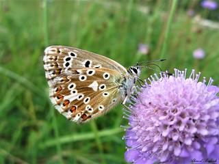 Butterfly 1399