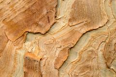 DSC_8050 (Manuel Eumann) Tags: manueleumann nature baum tree rinde botanischer garten kiel art struktur