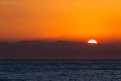 Sunrise at the Mediterranean Sea (Explored) (Normann Photography) Tags: birds italy sicily themediterraneansea blue coloresnaturales dawn orange silhouette sunrise
