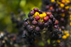 Tentación de color (kum111) Tags: naturaleza nature color bolas