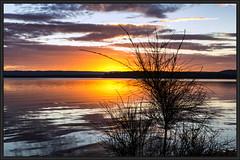 Spring Sunset 4 2017 (itsallgoodamanda) Tags: amandarainphotography itsallgoodamanda jervisbayphotography shoalhaven seascape sea stgeorgesbasin sunset sunsetphotography silhouettetrees sky skyreflections ocean tranquil peaceful australianlandscape southcoast spring2017 seaside water australiassouthcoast australiaseastcoast australiassoutheastcoast newsouthwales australia coastallandscape coastal prettysunset clouds cloudreflections australianphotography