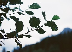 CNV00021 (SB_McAllister) Tags: fujica fujinon stx1 glencoe scotland filmisntdead lomography film 50mm