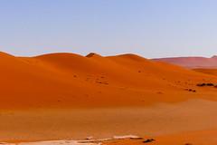 P1020974 (Seb_Jan) Tags: namibie namibia afrique africa afrika summer 2017 road trip roadtrip travel adventure holiday nature explore lumix wildlife safari picoftheday photooftheday dune desert naukluft sossusvlei red sand wonder merveille sesriem