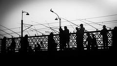 the world in black/ enjoying the best seat in town (Özgür Gürgey) Tags: 169 2017 24120mm bw d750 eap galatabridge karaköy nikon architecture bird dream dreamwithinadream grainy people silhouettes street istanbul