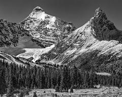 Mount Athabaska, Hilda Peak (martincarlisle) Tags: mountathabaska hildapeak alberta canada banffnationalpark canadianrockies rockymountains rockies mountainparks nationalparks parks mountains trees glaciers wista45dx bwfilm acros100 bwfp nikkor210mmlens