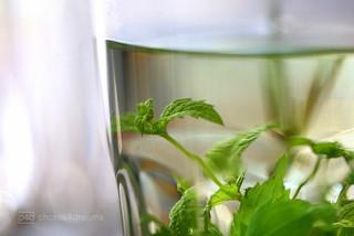 fresh peppermint tea - staying healthy hmm