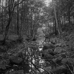 Tumbledown Creek (GrisFroid) Tags: landscape creek bush trees film blackandwhite monochrome 4x5 chamonix 45n2 nikkor 90mm f45 delta 100 bwfp