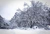 Winter has come (RissaJT_23) Tags: winter winterhascome weather coldweather cold snow snowfield snowfall ice landscape australianlandscape landscapephotography pretty white blanket tree trees canon6d canon canoneos6d canon24105mm mountdonnabuang alpineregion alpine alps australianalps yarraranges