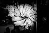 Straws (martinpmayer) Tags: kulturnacht ulm mono sw strohhalme straws blackandwhite bar nightlife