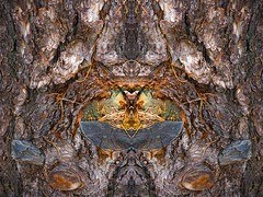 Forest niche (rocallosa) Tags: mirrors artphotography whimsy trees bark texture
