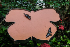 Butterfly Garden at Changi Airport (PVT Photography) Tags: butterflygarden changiairport butterfly garden changi airport singapore insect pvtinc pvtphotography pvt asia asian nature macro tropical flower