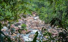 23.06-Sinharaja-Sri-Lanka-canon-1500px-033