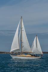 Cyrene (Matchman Devon) Tags: channel regatta 2017 paimpol cyrene