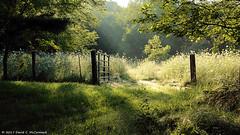 Lush (David C. McCormack) Tags: americana country eos eos6d environment farm flowers illinois landscape midwest nature outdoor rural sunrise sunriseset
