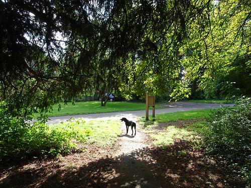 Dog at Duke's Drive, 2017 Aug 13