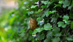 macro nature (rafasmm) Tags: lodz łódź poland polska europe park nature leaf green flowers flower