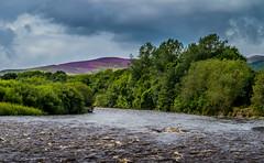 River Tweed (ianpaterson1) Tags: river tweed peebles selkirk purple heather scotland