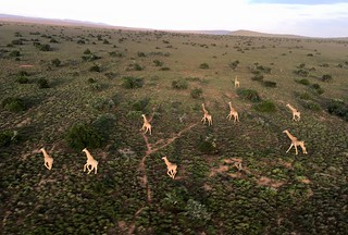 South Africa Hunting Safari - Eastern Cape 42