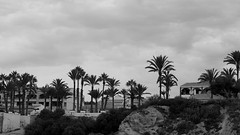 palms and clouds (pepe amestoy) Tags: blackandwhite landscape elcampello spain fujifilm xe1 carl zeiss planar 250 t zm planart250 m mount