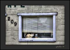 Cat on a Hot Window Ledge  Enhancer (the Gallopping Geezer '5.0' million + views....) Tags: building structure smalltown backroad backroads rural country elba mi michigan sign signage signs canon 5d3 24105 geezer 2016