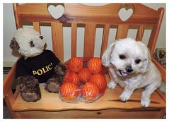 Shutterbugs - The Color Orange (marilyntunaitis) Tags: teddybear stuffedanimal plush bella shutterbugsorange