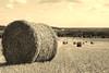 Ballot de paille (tomwel60) Tags: ballot de paille champs wheat fields