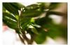 ZZ (fotoJENica) Tags: zz plant lensbaby
