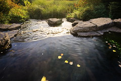 RG_413 (亞雲 Ed Lee) Tags: nikon d600 1635mm vr f4 outdoor morning color colour richmond hill green water fall leaf leaves flow landscape bright shadow perspective rock bush blur mood reflection