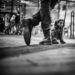 3187 (Elke Kulhawy) Tags: littledoglaughedstories littledoglaughednoiret monochrome bnw bw blackandwhite dog street 50mm