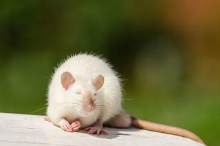 Mon petit compagnon / My little companion :)