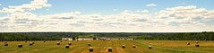 Bigoudis / Hay rolls (deplour) Tags: foin champs bigoudis hay rolls field inexplore explored explorer